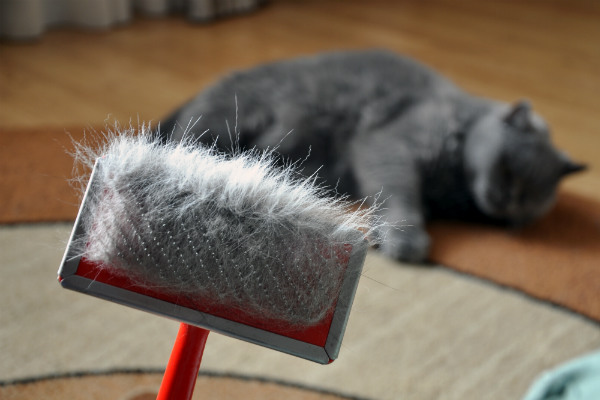 вычес колтунов у кошек